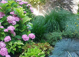 gradina amenajata cu flori si plante decorative